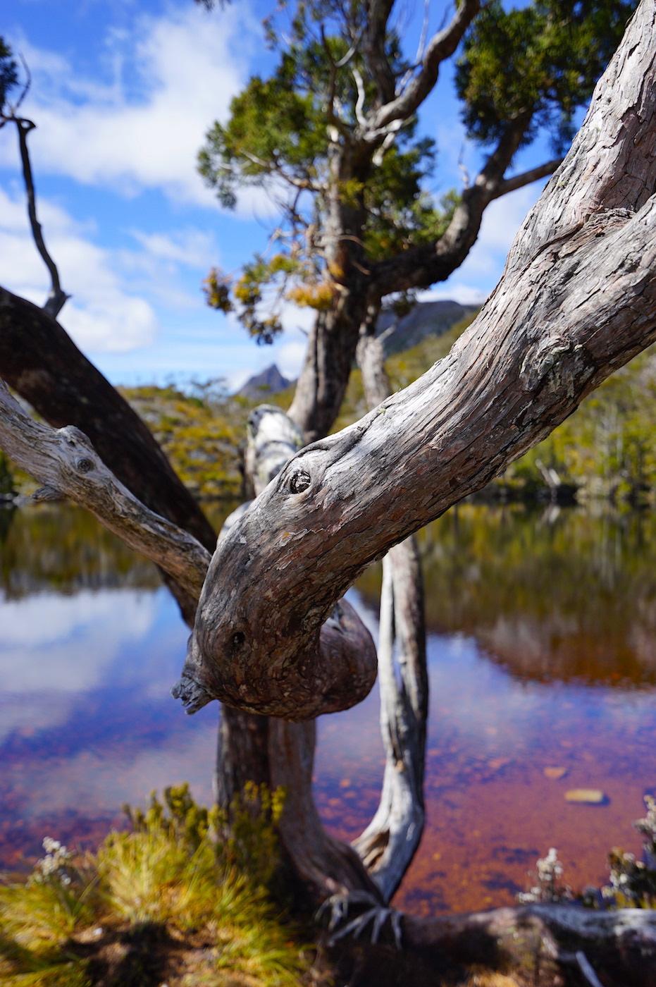 Eukalyptus umrahmt die ganze Landschaft