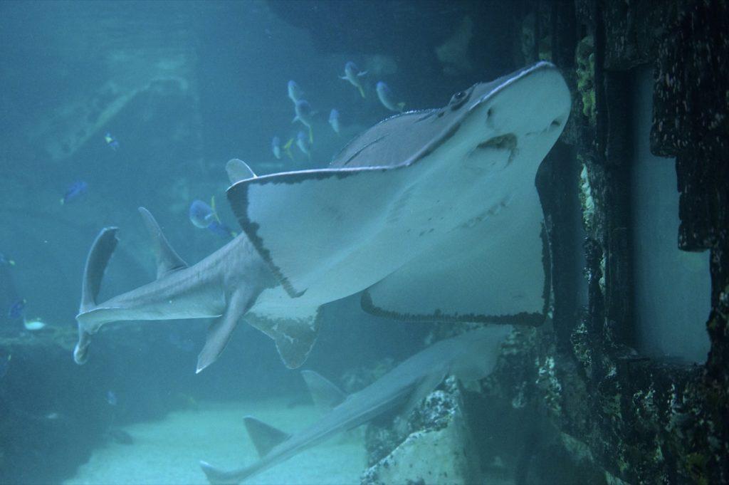 Im riesigen Aquarium lassen sich wunderbare Geschöpfe studieren